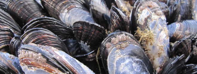 Mussels and theBeach…